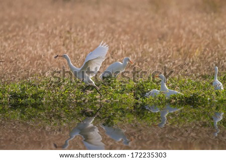 A White Egret with a Big Moth in Its Beak by the River - stock photo