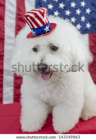 A white fluffy bichon frise dog wears an Uncle Sam hat with the American flag in the background, patriotic scene - stock photo