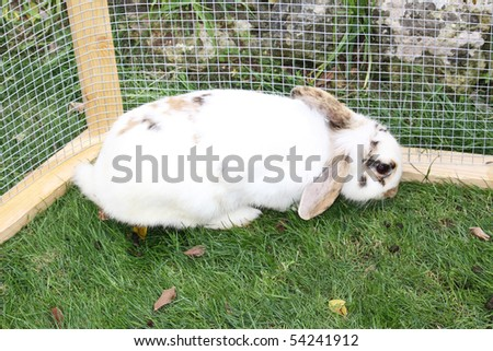 a white fluffy bunny rabbit in a cage - stock photo
