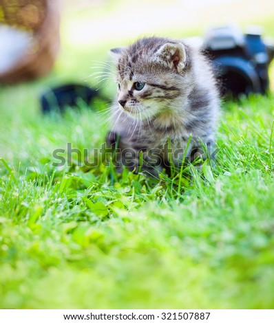 a white kitten with no name camera, outdoor - stock photo