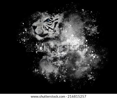 A white tiger with blue eyes is isolated on a black background with artistic paint splatters around for a creativity or art concept. - stock photo