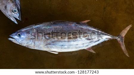 A whole tuna at the wholesale fish market - stock photo