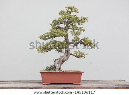a wide variety of bonsai plants are placed in the flower garden - stock photo