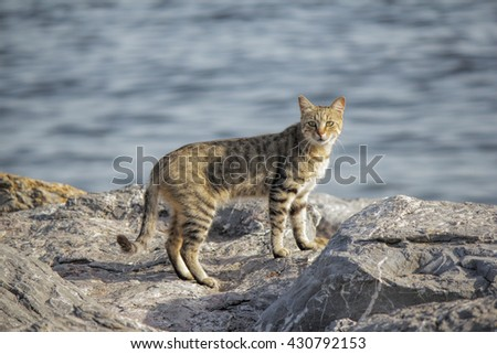 A wild domestic cat looking to camera. Cats resting on the beach  - stock photo