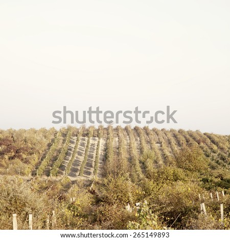 A wine vineyard in France.Special toned photo in vintage style - stock photo