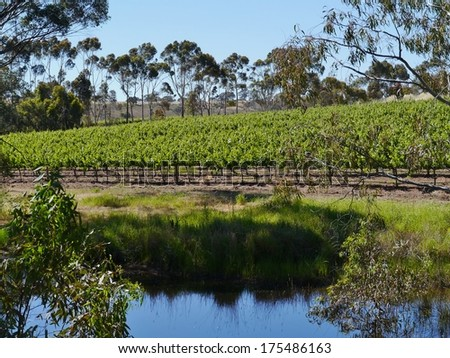 A wine vineyard in spring in the Clare valley in south Australia - stock photo
