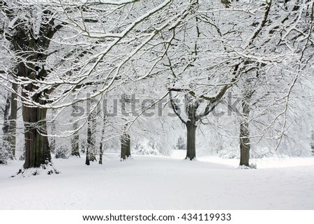 A winter forest with frozen trees and an icy pond  - stock photo