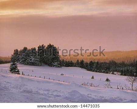 A winter scene - stock photo