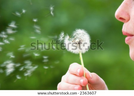 A woman blowing on a dandelion in the summer time - stock photo