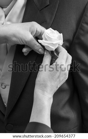 A woman hand putting the boutonniere flower on a groom - stock photo