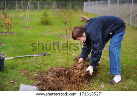 A woman planting a tree on a spring - stock photo
