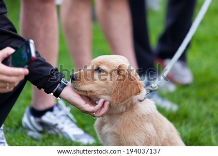 A woman takes a break from her cell phone to reach down and pet an adorable golden retriever puppy in the park. - stock photo