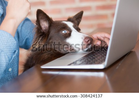 A woman working on her computer at her house with her dog looking at the screen of her laptop really interested. - stock photo