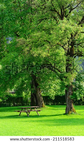 A  wooden bench under fruit trees - stock photo
