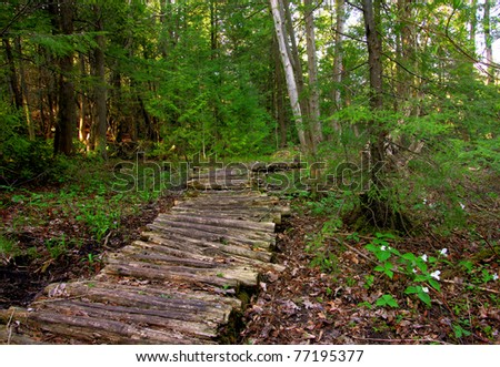 a wooden boardwalk through the forest - stock photo