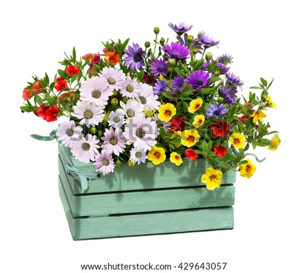 A wooden box with garden flowers with opulent blossoms. - stock photo