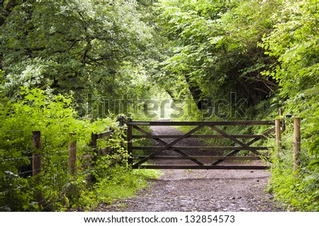 A wooden gate on path leading through a green forest in English countryside, Dartmoor, Devon, England - stock photo