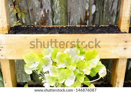 A wooden pallet, modified slightly to grow vegetable plants. - stock photo