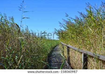 A wooden pathway in the reeds at a nature reserve in Sweden. - stock photo