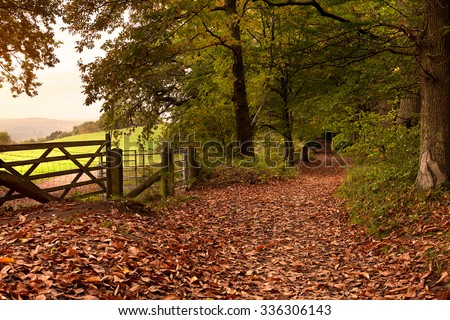 A woodland footpath covered in autumn leaves in the early morning.  The photo take was taken in the Surrey Hills, UK in the month of October. - stock photo