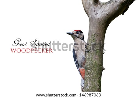 A Woodpecker on a Tree Isolated on White Background.Copy Space. - stock photo