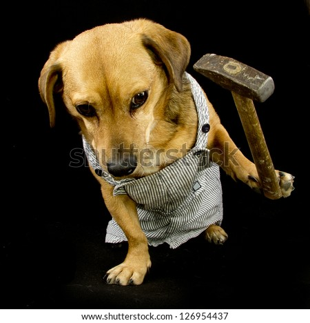 a worker dog and hammer - stock photo