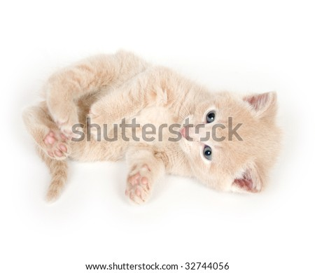 A yellow kitten playing on a white background - stock photo