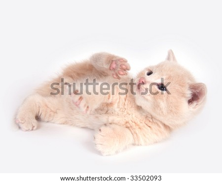 A yellow kitten rolls and plays on a white background - stock photo