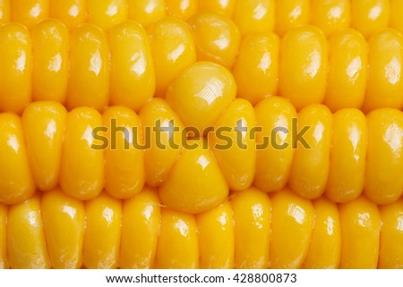 a yellow ripe juicy boiled corn closeup - stock photo