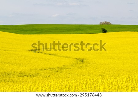 A yellow road through the field - stock photo