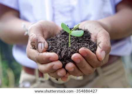 A young boy hand holding Seeding,Seedling for care and planting - stock photo