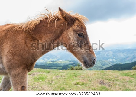 A young foal portrait  in the mountain - stock photo