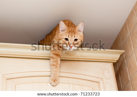 A young ginger tabby cat on kitchen cupboard - stock photo