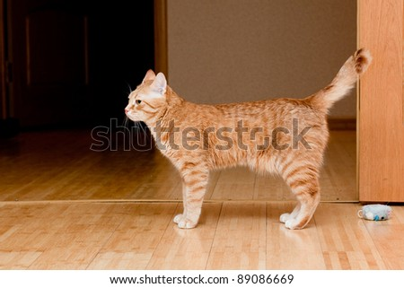 A young ginger tabby cat on the floor - stock photo
