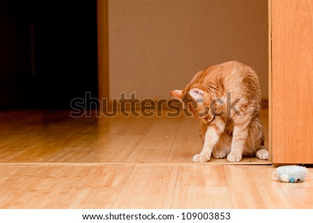 A young ginger tabby cat on the wooden floor - stock photo