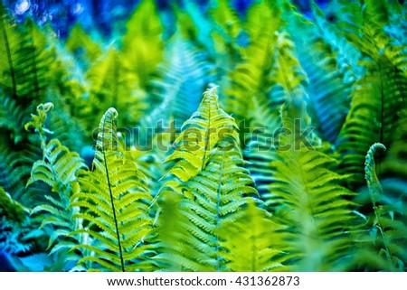 a young green fern growing in forest - stock photo