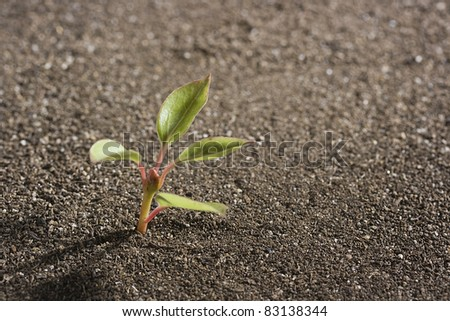 A young green seedling growing out of brown soil. - stock photo