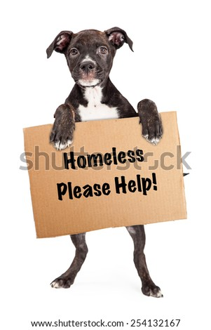A young rescue dog standing up on hind legs and holding a cardboard sign with the words Homeless-Please Help. - stock photo
