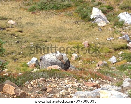 A young wild rabbit or wild hare sit back isolated on the rock in natural park, Seattle - stock photo