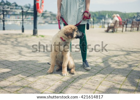 A young woman is standing in the street with her Leonberger puppy on a sunny day - stock photo