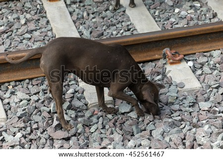 Abandoned black hungry dog is searching for food near railway in Thailand. - stock photo