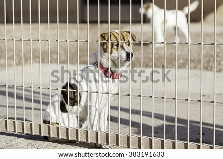 Abandoned dog and caged animal abuse and neglect - stock photo