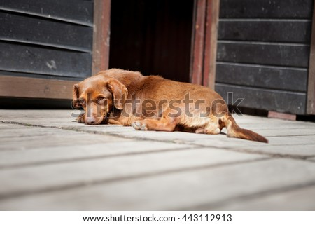 Abandoned dog laying and looking  - stock photo