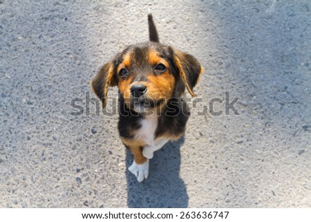 Abandoned doggy with broken pow looking at veterinarian - stock photo