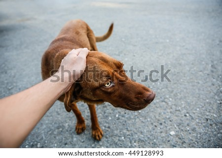 Abandoned, frightened young dog. - stock photo