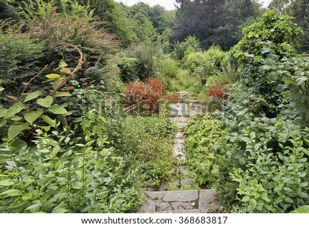 Abandoned garden with crazy green foliage - stock photo