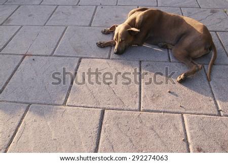 Abandoned homeless stray dog sun bathing on foot path - stock photo