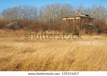 Abandoned house with dry grass and surrounded by caraganas and leafless tress - stock photo