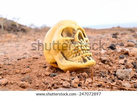 Abandoned Human Skull in the Rock Desert - stock photo