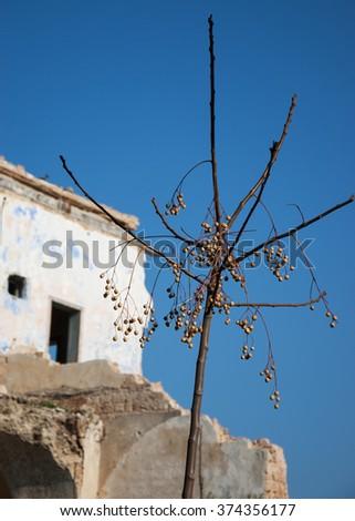 Abandoned ruined old house and a bare tree with dried fruits. Selective focus on the tree. - stock photo